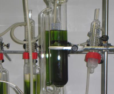 El proyecto ENERGREEN trata de lograr la eficiencia en el cultivo de microalgas